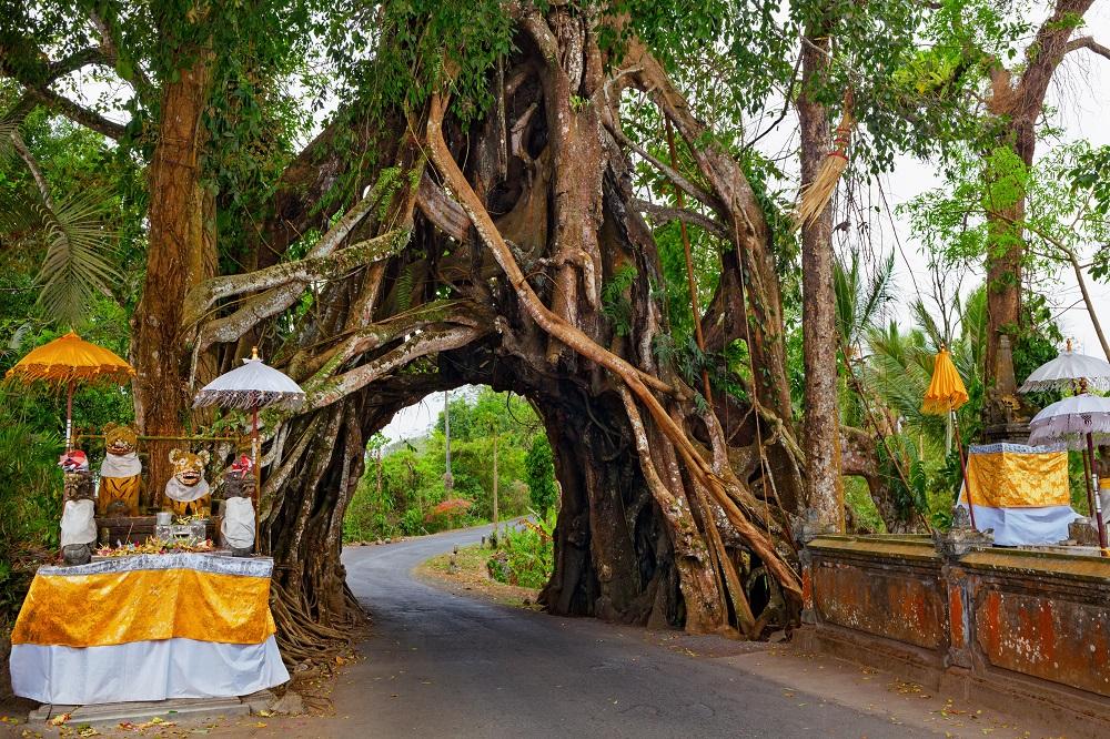 """Wisata Tersembunyi di Bali """"Bunut Bolong"""""""